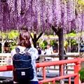 写真: 亀戸天神の藤棚を撮るカメラ女子。。(1) 20180422