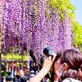Photos: 亀戸天神の藤棚を撮るカメラ女子。。(2) 20180422