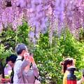 Photos: 亀戸天神の藤の花。。あまりに綺麗で立ち止まって撮る風景 20180422