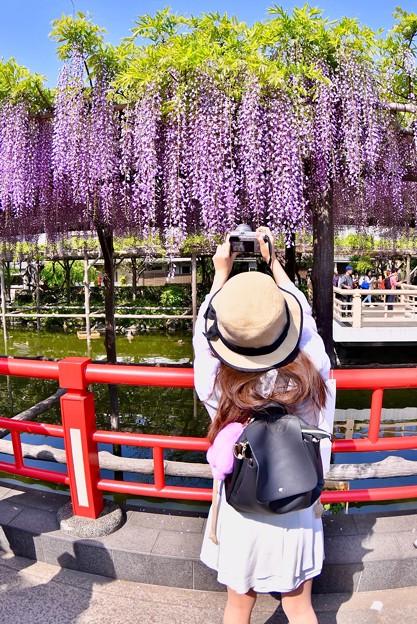 カメラ女子も亀戸天神の藤の花撮りに。。20180422
