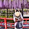 写真: カメラ女子も亀戸天神の藤の花撮りに。。20180422
