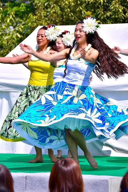華麗に可愛く踊るフラダンス。。(1) 20180422