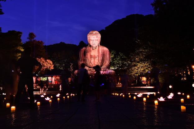 撮って出し。。長谷灯り 鎌倉大仏ライトアップ 8月26日