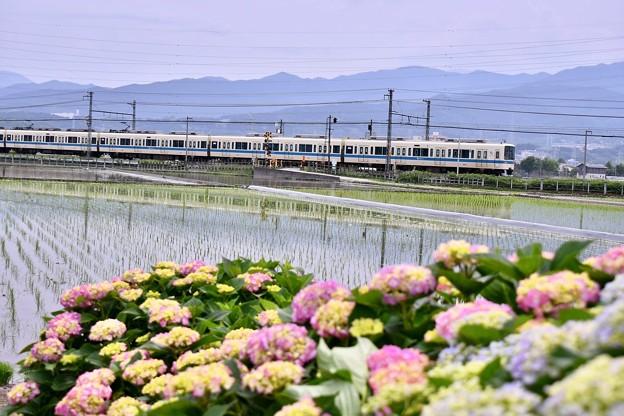 開成町の田んぼと小田急線8000系。。20180526