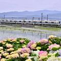 写真: 開成町の田んぼと小田急線8000系。。20180526