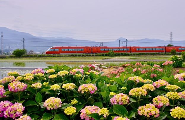 Photos: 開成町の紫陽花と小田急ロマンスカーGSE。。20180526