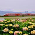写真: 開成町の紫陽花と小田急ロマンスカーGSE。。20180526
