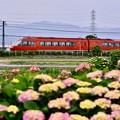 写真: 開成町の紫陽花と小田急ロマンスカーGSE(2)。。20180526