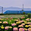 写真: 開成町の紫陽花と小田急ロマンスカーMSE 20180526
