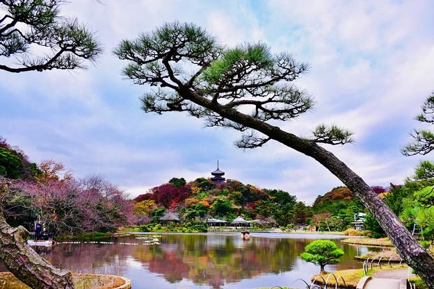 撮って出し。。今年最後の紅葉 横浜三渓園へ(1) 12月8日