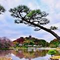 Photos: 撮って出し。。今年最後の紅葉 横浜三渓園へ(1) 12月8日