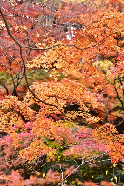 撮って出し。。今年最後の紅葉 横浜三渓園へ(2) 12月8日