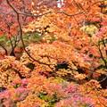 Photos: 撮って出し。。今年最後の紅葉 横浜三渓園へ(2) 12月8日