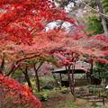 撮って出し。。今年最後の紅葉 横浜三渓園へ(3) 12月8日