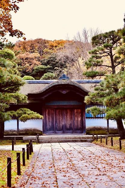 撮って出し。。今年最後の紅葉 横浜三渓園へ(4) 12月8日