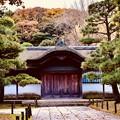 Photos: 撮って出し。。今年最後の紅葉 横浜三渓園へ(4) 12月8日