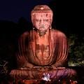 Photos: 夏の終わりの鎌倉の大仏ライトアップ 長谷灯り(2) 20180826
