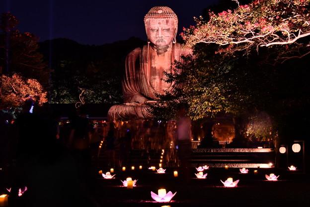 夏の終わりの鎌倉の大仏ライトアップ 長谷灯り(3) 20180826
