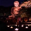 Photos: 夏の終わりの鎌倉の大仏ライトアップ 長谷灯り(3) 20180826