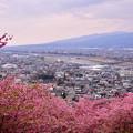 撮って出し。。夕方の松田の河津桜 20190302