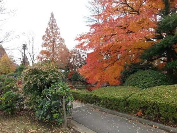Photos: 20121202_114932