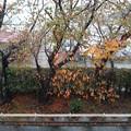 Photos: 20121126_151116