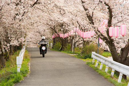 ご近所桜道で自撮り・1