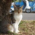 Photos: 叶崎灯台の猫・4