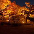 須磨離宮公園・3