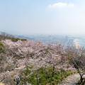 Photos: 須磨浦公園の桜・4
