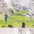 Photos: 2019夙川公園の桜・3
