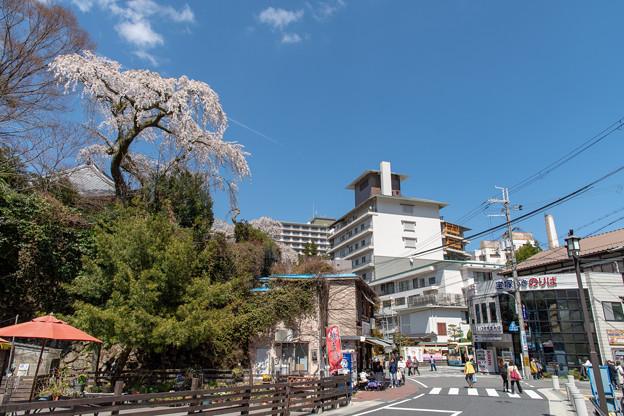 2019有馬温泉の桜・5