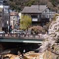 Photos: 2019有馬温泉の桜・6