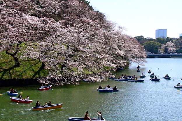 写真: 江戸城お堀端散歩