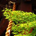 写真: 境内の緑