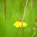 写真: 野原の緑