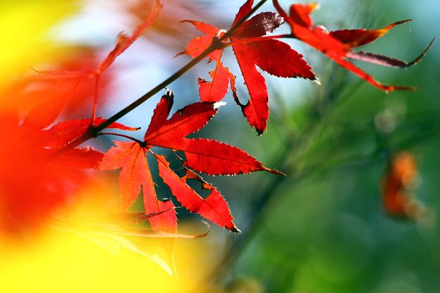 色づく病葉