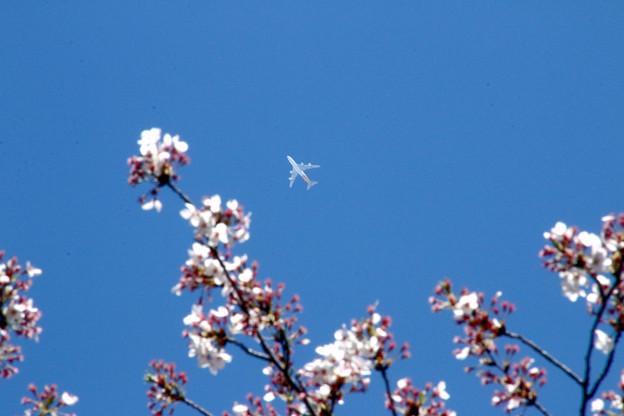 Photos: 桜の空