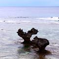 Photos: 東シナ海