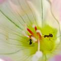 ヒルガオの花の中