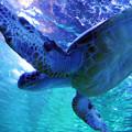 Photos: ウミガメ