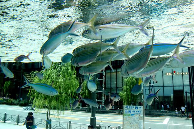 銀座の水族館