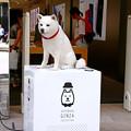 Photos: 銀座のSoft Bank