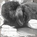 写真: 在りし日の愛兎