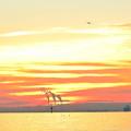 写真: 城南島から見た朝焼け