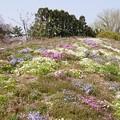 Photos: 春の丘