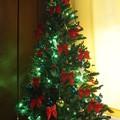 Photos: もみの木その木を飾りなさい