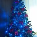 写真: ブルークリスマスツリー