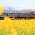 写真: 菜の花畑とロマンスカー