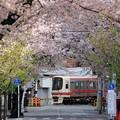 Photos: 京王線沿線の桜トンネル